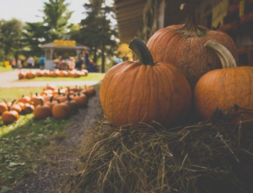Fall on the Farm at Youngsville's Hill Ridge Farms