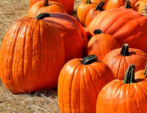 Pumpkin and Harvest Festival at Youngsville's Hill Ridge Farms