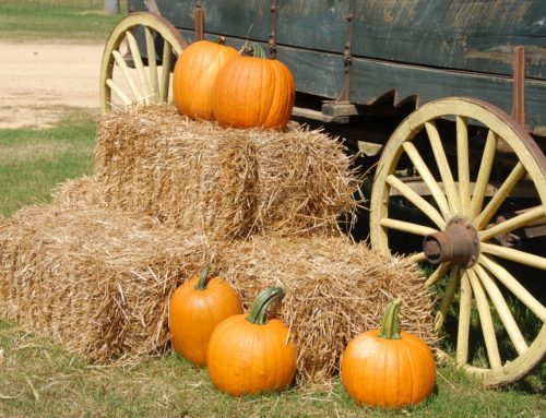 Hayrides, Pumpkins, and Much More at Youngsville's Hill Ridge Farms